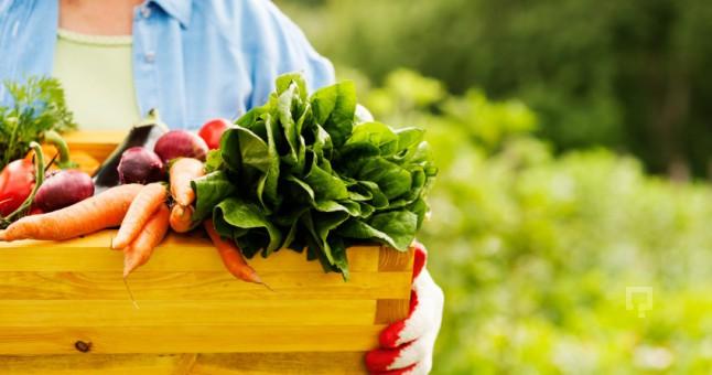 Zararlı Böceklerle Organik Tarımda Mücadele Yöntemleri