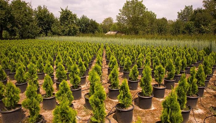 İç Mekan Süs Bitkileri Yetiştiriciliği